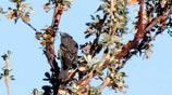 Bosque de Polylepis