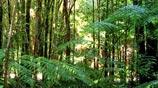 Bosque Temperado del Sur