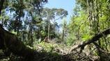 Aperturas por árboles caídos