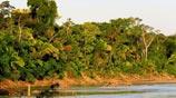 Habitats de Aves Neotropicales