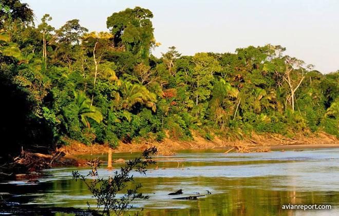 Bosque Lado del Húmedo Tropical Amazónico