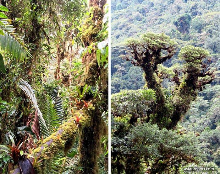 Bosque humedo montano tropical pdf
