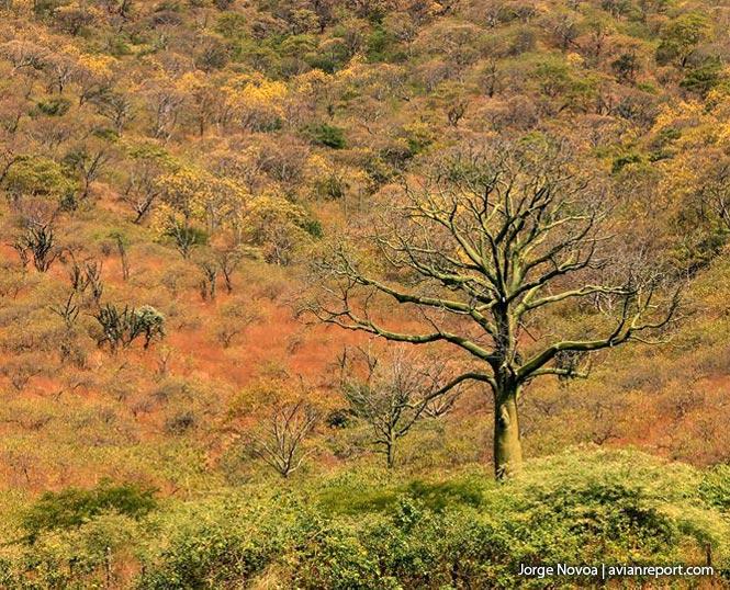 bosque tropicale caducifolio