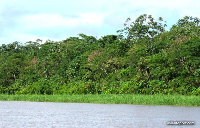 Bosque de la orilla e isla fluvial