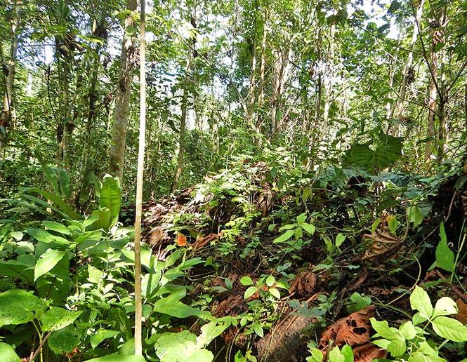 bosque secundario