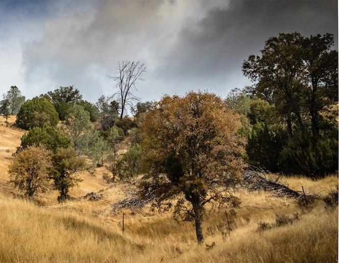 Bosque de Pinos y Robles