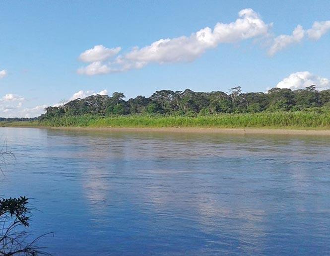 matorral de isla de ríos