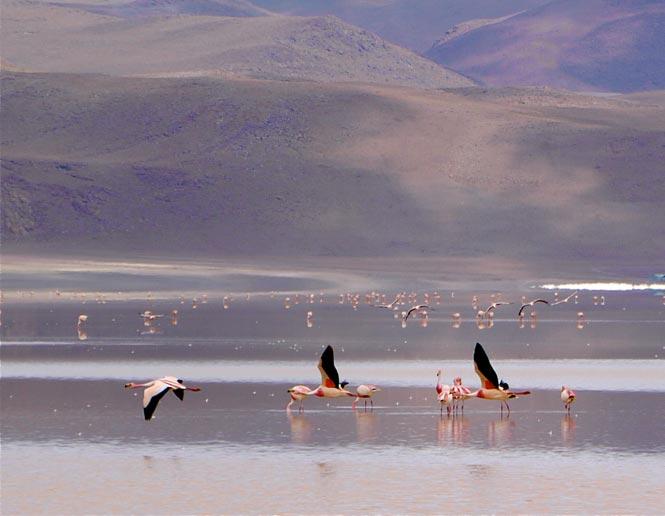 lagos alcalinos