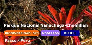 parque nacional yanachaga-chemillen