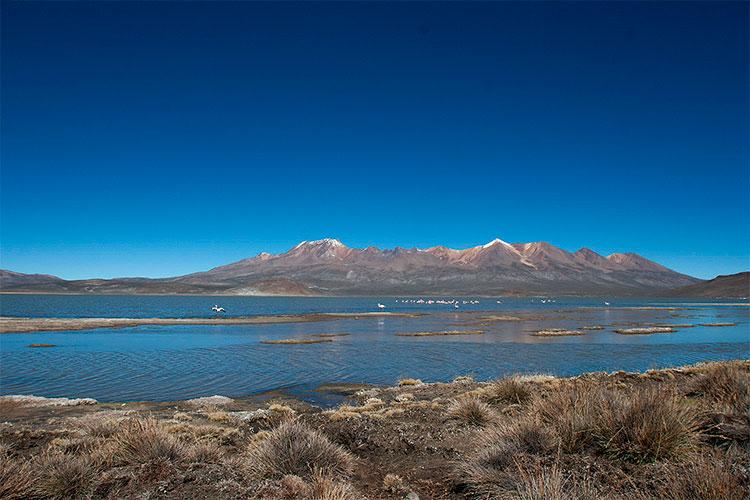 laguna salinas reserva nacional salinas y aguada blanca