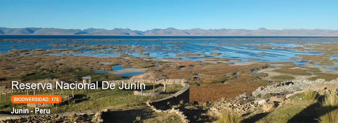 reserva nacional de junin