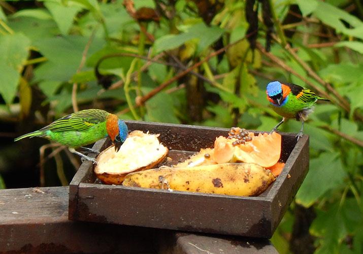 alimenta aves silvestres
