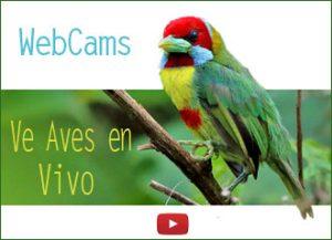 webcam camaras aves en vivo